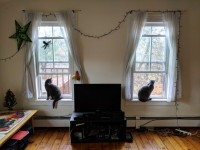 Winter/Spring sublet East Rock Bradley Street beautiful sunny apartment 1 BR in 2BR apt