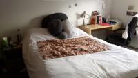 Cozy bedroom in East Rock