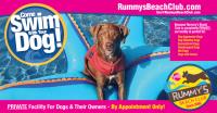Dog Swim Coach / Lifeguard / Social Media Intern