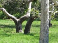 Seeking Botanist, Arborist/Arboriculturist, Ecologist, Forester, Biologist, Geosciences/Geographer