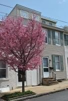 Student Friendly House for rent