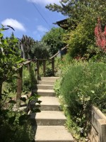 Garden of Eden on Panoramic Hill